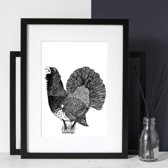 MODERN CAPERCAILLIE ILLUSTRATIVE PRINT BY GILLIAN KYLE