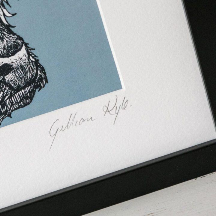 Highland Cow framed print by Gillian Kyle