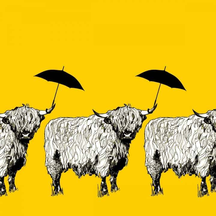 Dougal Highland Cow pattern case in sunshine yellow by designer Gillian Kyle - print detail