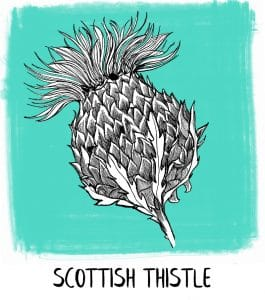 Scottish thistle emblem of Scotland icon from Gillian Kyle